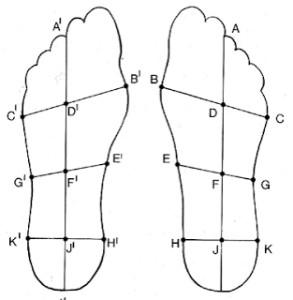 Schema van de linker- en rechtervoet volgens de Kwadrant-theorie